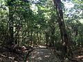Forest in Usa Shrine 2.JPG