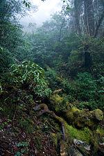 Forest in Yakushima 41.jpg