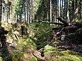 Forest near the Große Bode 05.jpg