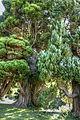 Forever green (8059751111) (2).jpg