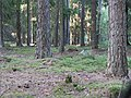 Forrest - panoramio.jpg
