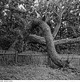 Fotothek df ps 0001140 Bäume.jpg