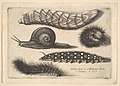 Four Caterpillars and a Snail MET DP823956.jpg