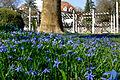 Frühling im Bad Mergentheimer Kurpark. 15.jpg