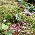 Frühlingserwachen im Naturschutzgebiet Eiterbachtal.jpg