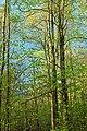 Frank Gantz Trail (4) (26998350526).jpg