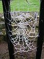 Frozen web.JPG
