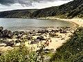 Fuchsia by the beach - geograph.org.uk - 523869.jpg
