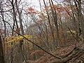 Fujiwaracho Yamaguchi, Inabe, Mie Prefecture 511-0524, Japan - panoramio (5).jpg