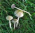 Fungi - Flickr - gailhampshire.jpg