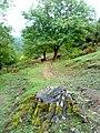 Gakh Region- Gashgachay Village- Qasqacay kendi-www.Qaxlilar.tk - panoramio (1).jpg