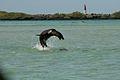 Galapagos Playful Sea Lion.jpg