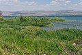 Galilee - Israël (4675246590).jpg