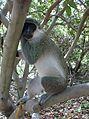 Gambia & Senegal 2009 (3686736041).jpg