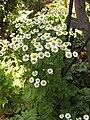 Gardenology-IMG 8026 hunt10aug.jpg