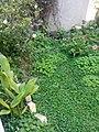 Gardens in Baghdad 30.jpg