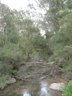Gardiners Creek Blackburn.PNG