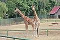 Gdansk zoo 14.jpg