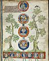 Genealogical roll recording the Norman ancestry of William the Conqueror , England (East Anglia), c. 1300-1307, Royal 14 B vi.jpg