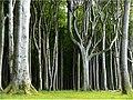 Gespensterwald6.jpg