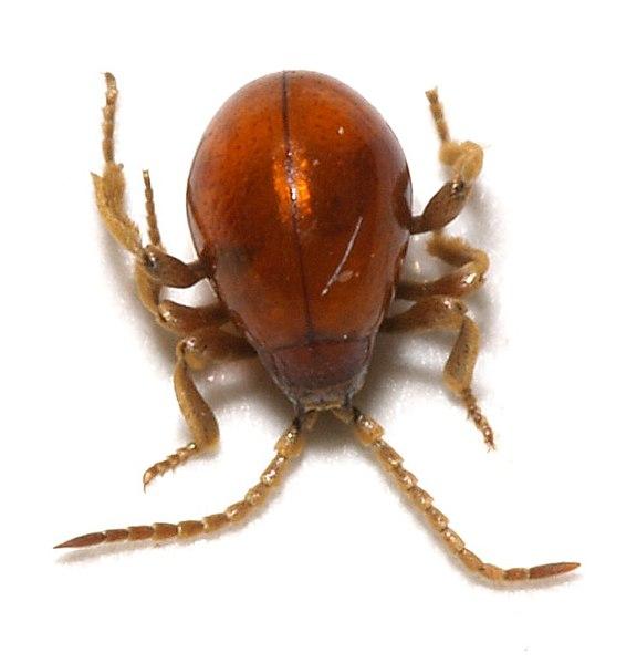 Dr les d 39 insectes dans les coins sombres de la maison - Insecte dans les maisons ...