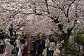 Ginkakuji 2009-04-08 (3633960675).jpg