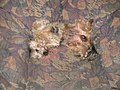 Gismo-Sessel-01.jpg