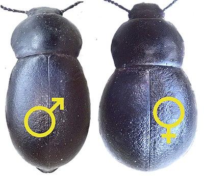 Datierung eines Transgender-Männchens auf weiblich