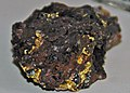 Gold in matrix (Rattlesnake Jack Mine, Galena, Black Hills, South Dakota, USA) (17207457991).jpg