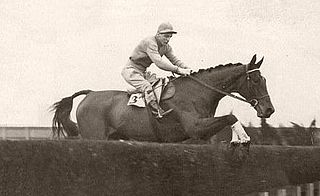 Golden Miller Irish-bred Thoroughbred racehorse