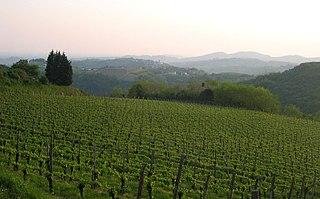 Slovenian wine Wikimedia list article