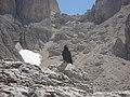 Gracchio ruffiano - panoramio.jpg