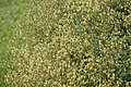 "Gradina Botanica ""Vasile Fati"" (4653954656).jpg"