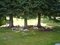 gravestones on the grass under three trees