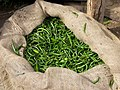 Green chillies.jpg