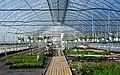 Greenhouse interior.jpg