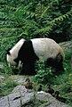 Großer Panda Bao Bao Berlin W 09.jpg