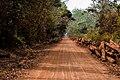 Grumes de teck dans la forêt de la Lama au Bénin.jpg