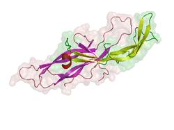 Humanes Choriongonadotropin, β-Untereinheit