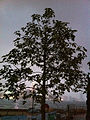 HK Admiralty night Tamar Park tree Oct-2012.JPG