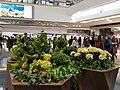 HK Kln Tong 九龍塘 Festival Walk mall 又一城商場 January 2020 SS2 01.jpg