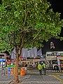 HK TST night Salisbury Road Star Ferry Piers Bus Terminus 尖沙咀碼頭巴士總站 tree Mar-2013.JPG