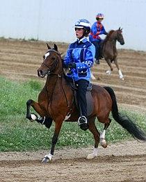 Hackney Road Pony Under Saddle Lawrenceburg.jpg