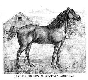 Morgan horse - Morgan horse, 1888