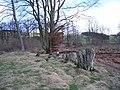 Harehope Wood - geograph.org.uk - 151351.jpg