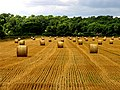 Harvested Land near Ufton Wood - geograph.org.uk - 37131.jpg