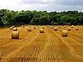 Harvested Land near Ufton Wood - geograph.org.uk - 37131.jpg