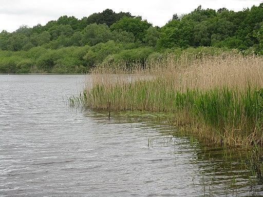 Hatch Mere, a Cheshire Wildlife Trust SSSI - geograph.org.uk - 2412673