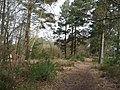 Heathland near Heath Pond - geograph.org.uk - 1220459.jpg
