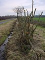 Hedge and Ditch - geograph.org.uk - 104929.jpg